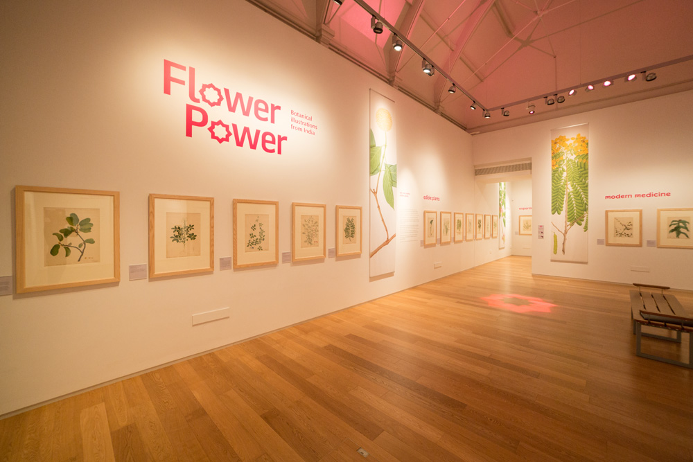 A wall displaying framed botanical drawings in the Flower Power exhibition held at the Royal Albert Memorial Museum & Art Gallery in 2017